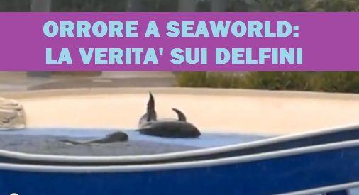 sea world DELFINI