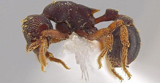 4.ANT