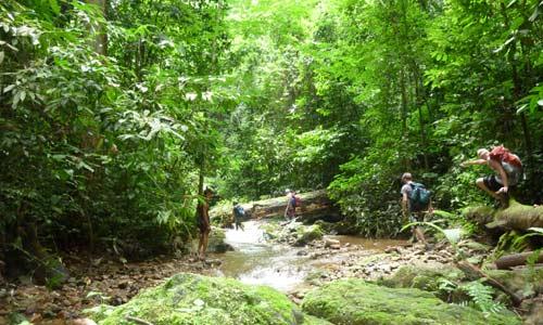 into-the-jungle