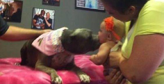 pitbull bacia bimba