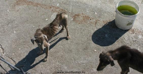 Cani detenuti in un canile rumeno