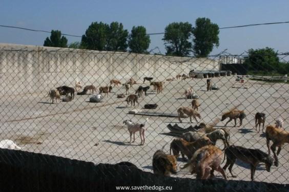Cani detenuti in un canile rumeno2