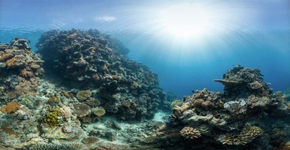 barriera corallina css