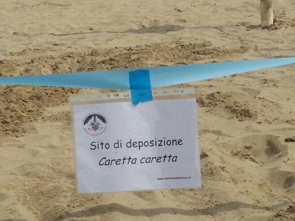 caretta roseto2