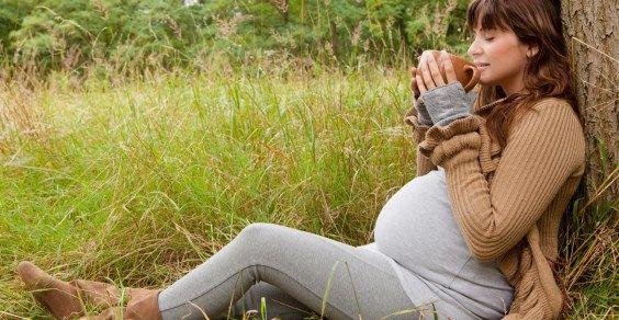 erbe gravidanza