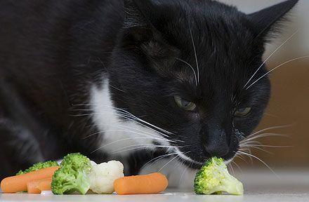 gatti veg