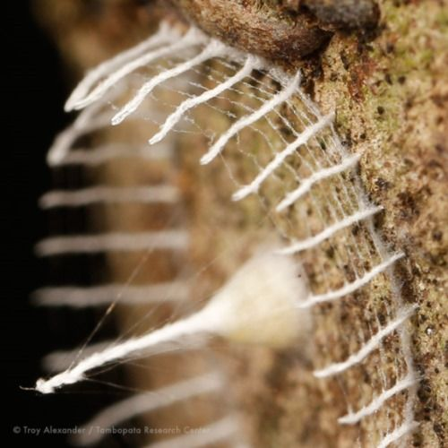 insetto peru1