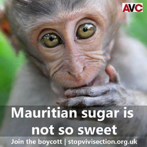 zucchero canna