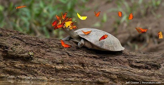 3. farfalle tartaruga