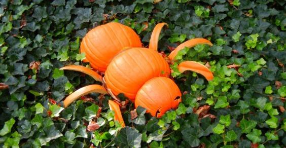 Haunted Pumpkin Garden cover