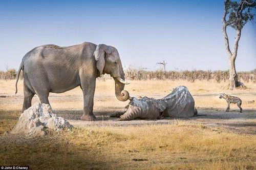 foto elefantessa