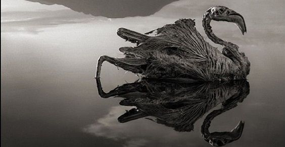 lago natron 2