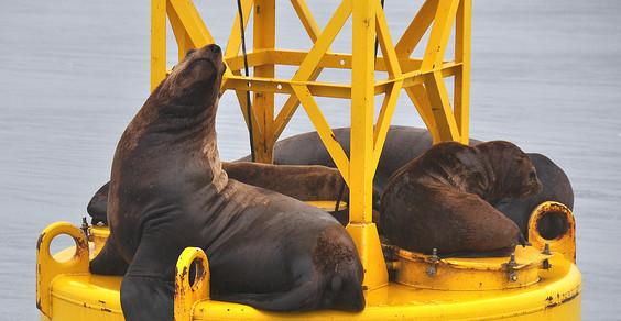 leoni marini eolico offshore