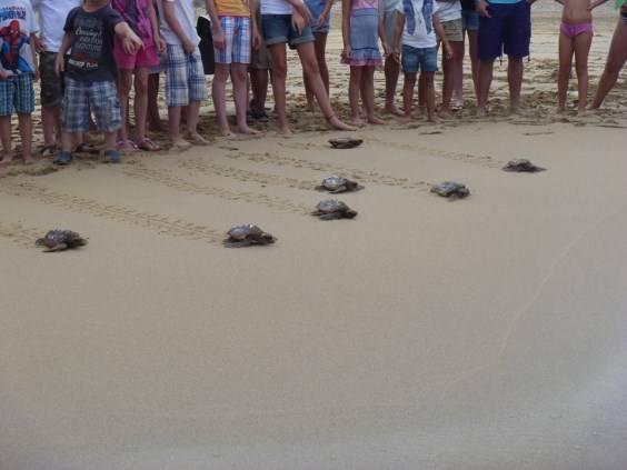 4. Cofete Fuerteventura progetto reintroduzione tartarughe