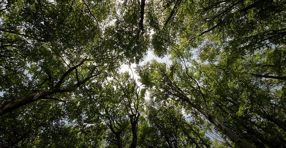 cop19 280 milioni contro deforestazione