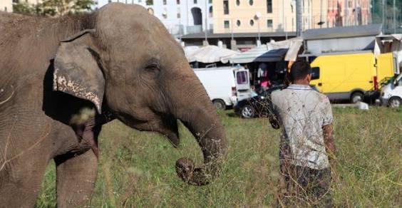 elefante roma