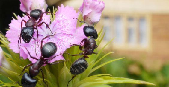 insetticidi orto