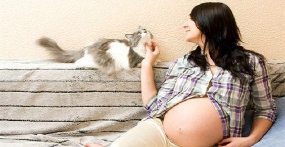 gatti gravidanza