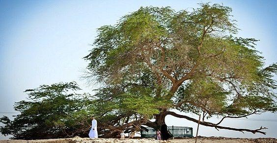 tree-of-life-42