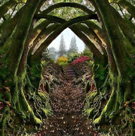 Tunnel di alberi muschiosi-1042-600-450-70