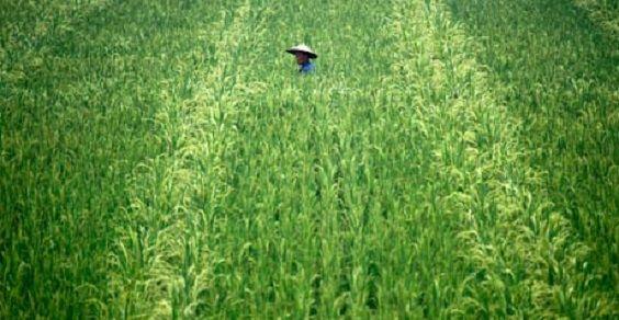 agricoltura cina
