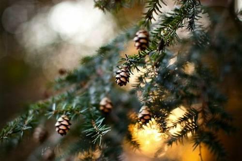 Immagini Natale Natura.Abeti Veri E Certificati Ecco Il Segreto Per Un Natale