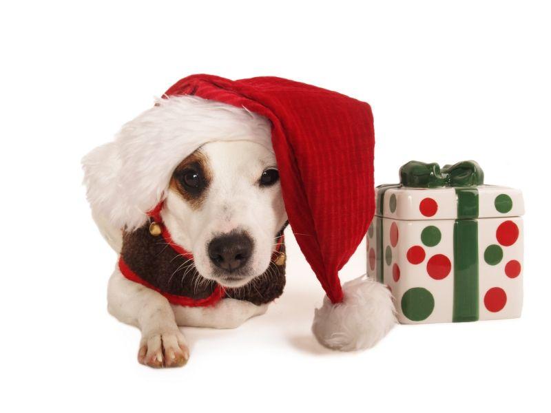regali di natale animali