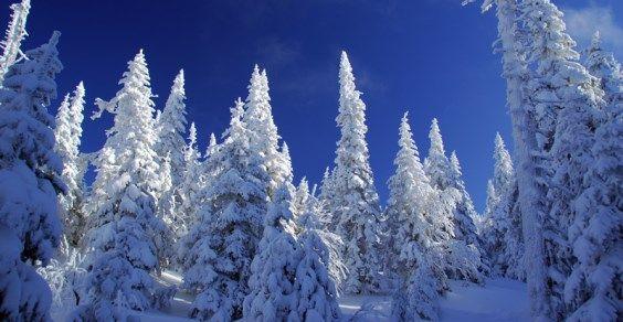 snow-trees-8