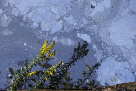 15. Inquinanti nel Canale Gowanus