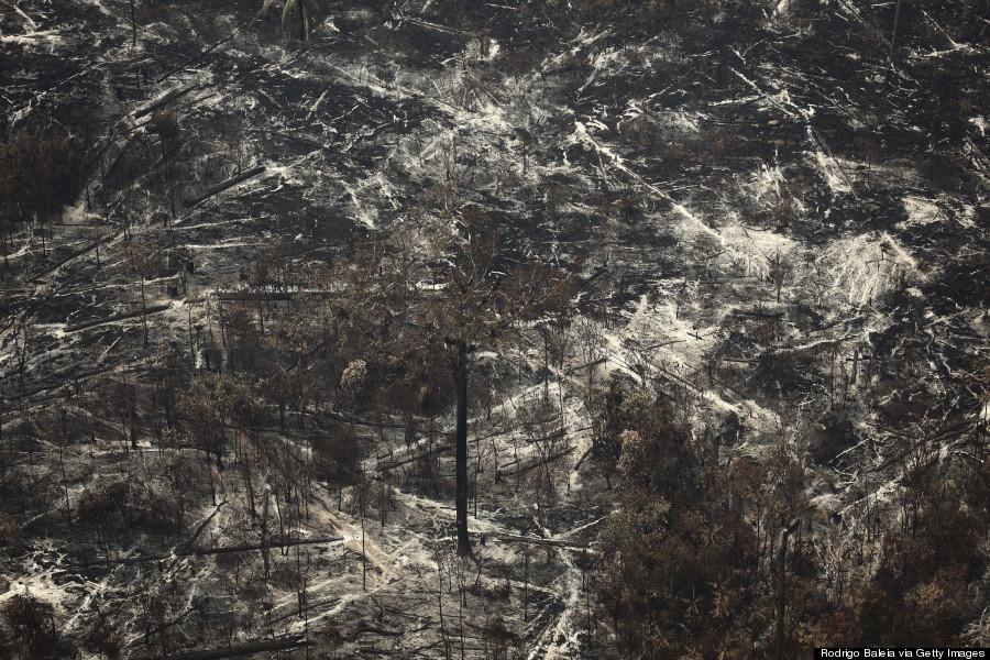 7. Conseguenze di un incendio boschivo