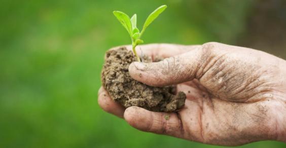 agricoltura sostenibile intensiva