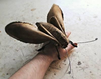 b2ap3_thumbnail_Large-Textile-moth-on-hand-small2.jpg
