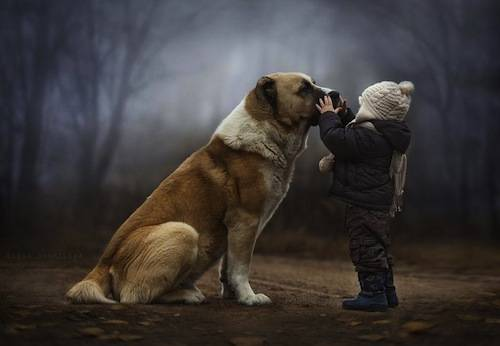 b2ap3_thumbnail_animal-children-photography-elena-shumilova-1.jpg