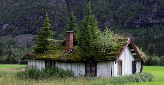 tetti verdi Norvegia