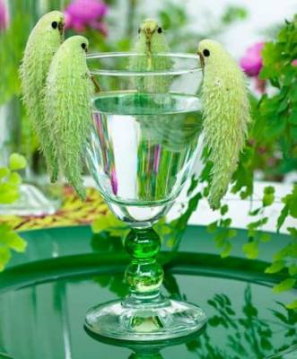 b2ap3_thumbnail_pianta-pappagalli-1.jpg