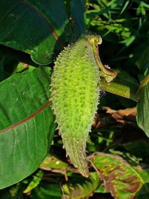 b2ap3_thumbnail_pianta-pappagalli-4.JPG