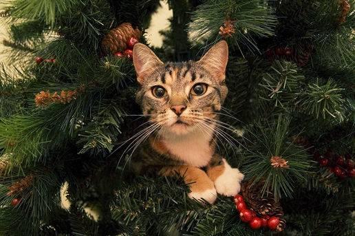 gatti-albero-di-natale