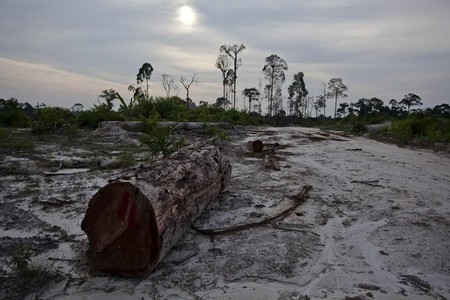 foreste olio palma 2