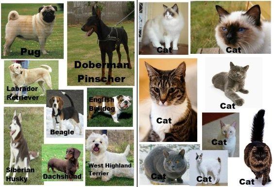 gatti cani razze