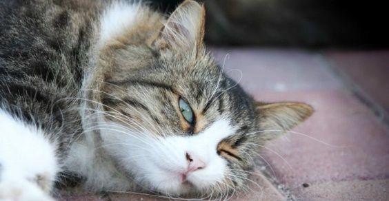 gatti stranezze