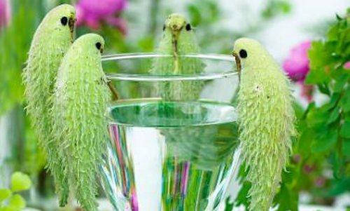 pianta pappagalli cover