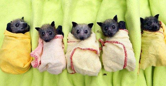 Come e perché attirare i pipistrelli nel vostro giardino