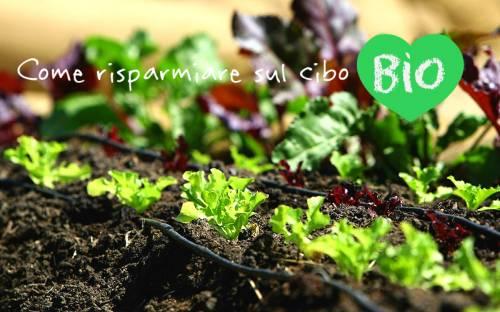 b2ap3_thumbnail_Risparmiare-sul-cibo-biologico_2.jpg