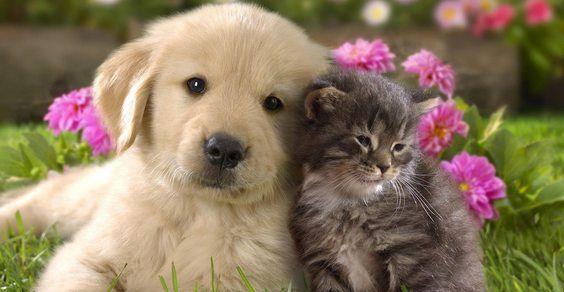 cani gatti insegnamenti