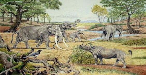 elefanti europa