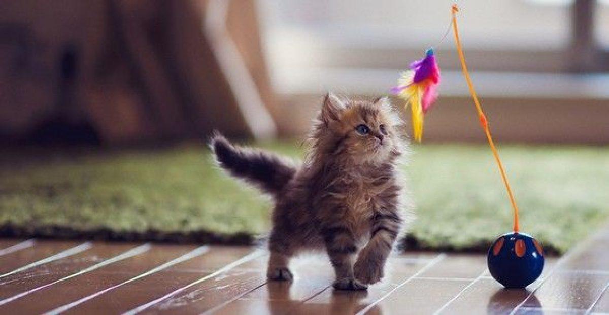 10 giochi per gatti fai da te GreenMe.it