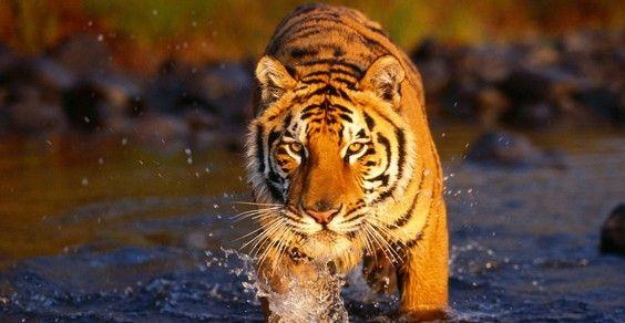 giornata mondiale natura fauna selvatica