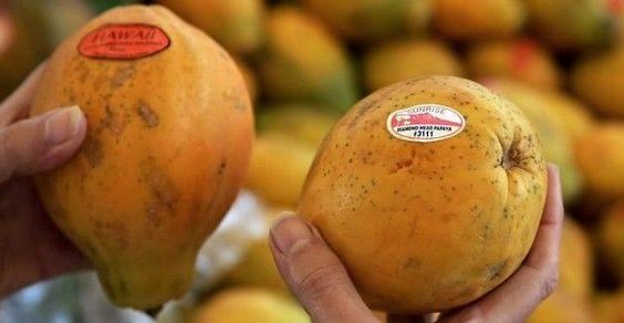 hawaii petizione ogm papaya