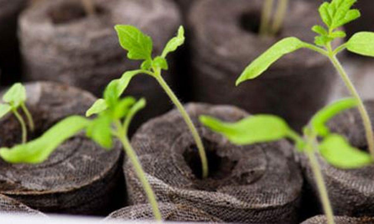 Costruire Una Mini Serra Riscaldata 10 semenzai fai-da-te - greenme.it