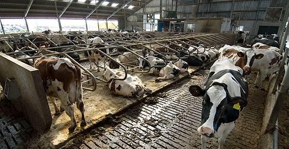 Ridurre il consumo di carne e formaggio